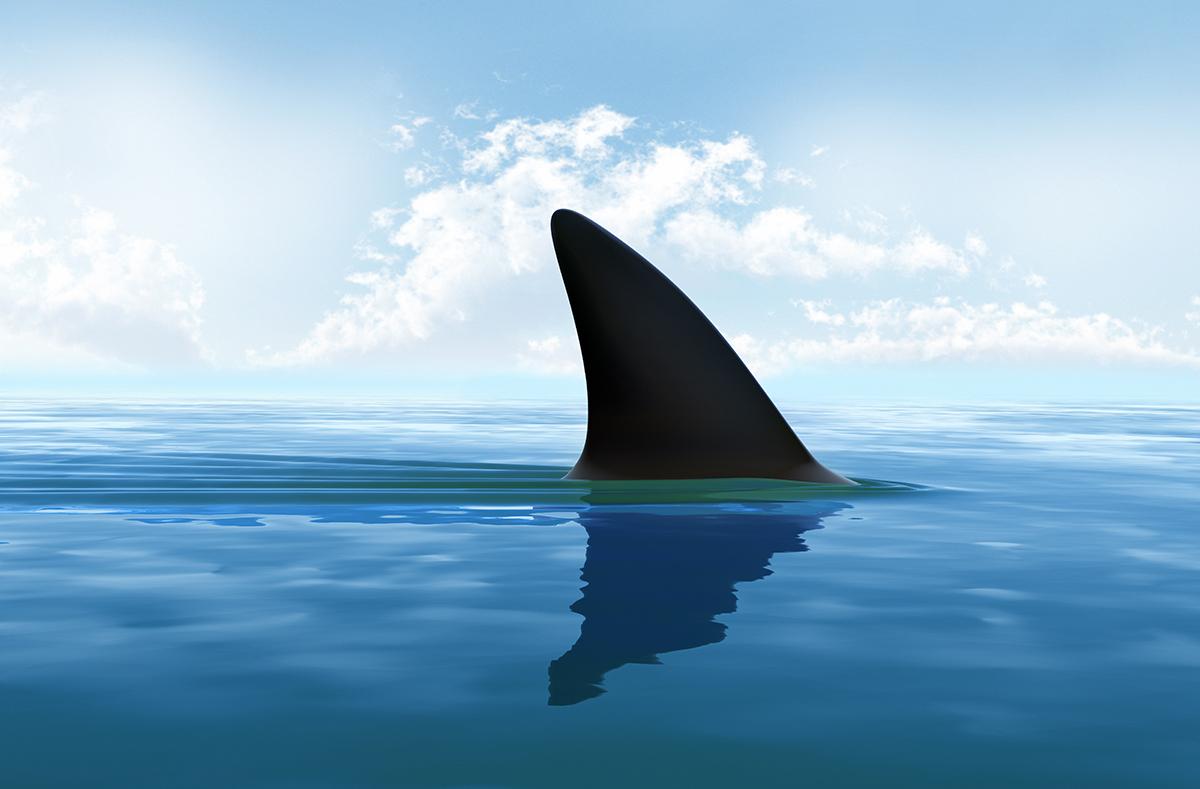 shark fin shows above water